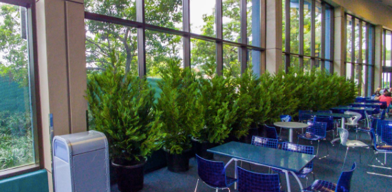 Indoor Disney Shrubs
